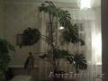 Продажа комнатного растения - Монстера