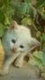 котенка в хорошие руки. срочно! пока маленькие